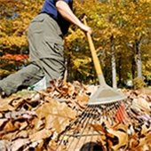 Leaf Compost Site Closes Soon