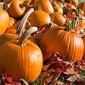 Pumpkin Camp