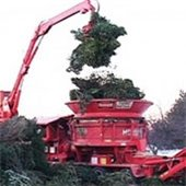 Christmas Tree Options