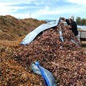 Leaf Recycling