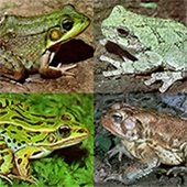 Tracking Frogs and Toads