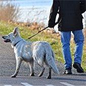Community Dog Walk